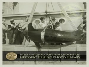 Picture Courtesy of the IGFA