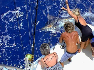 2009 Billfisheries of the Year – #3…St. Thomas