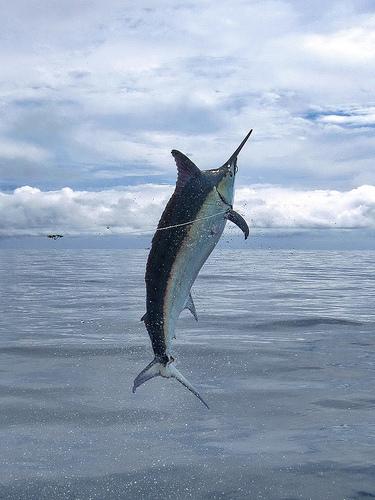 2009 Billfisheries of the Year – #6…Panama
