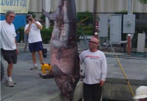 World's largest sword to date this year – caught in South Florida