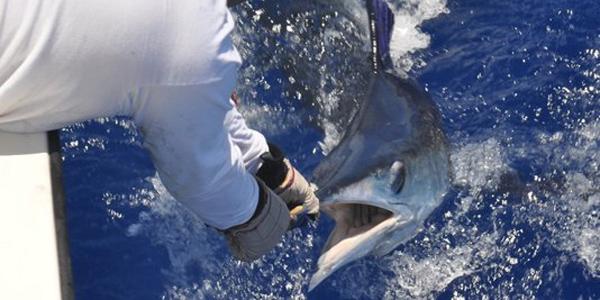 Brazil White Marlin