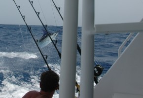 2010 Billfisheries of the Year – #5 St. Thomas