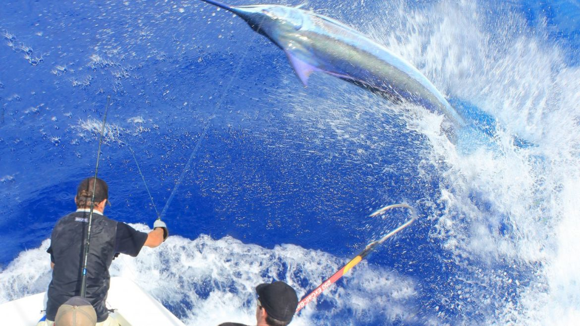 Pending blue marlin world record in New Zealand!