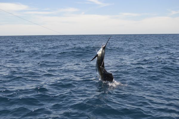 FishMonster trip report: Day 2, Sailfish Bay
