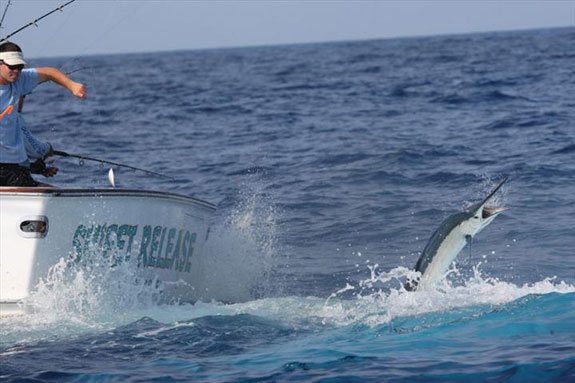 World Sailfish Championships this week