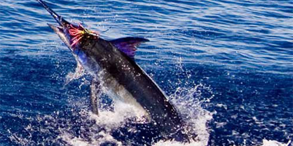 Hot fishing continues in Azores