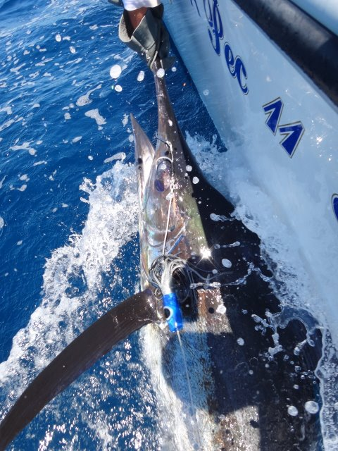 Richards Bay Billfish Run