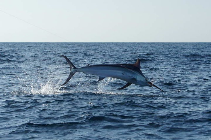 2011 Billfisheries of the Year – #5 Panama