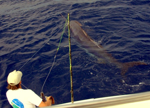 2011 Top Billfishery of the Year – The Azores