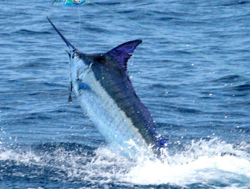 Cape Verdes Blue Bite Continues