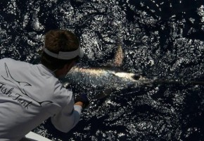 2012 Billfisheries of the Year – #10 South Florida & Keys