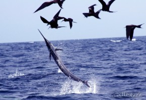 2012 Billfisheries of the Year – Honorable Mention Isla Mujeres
