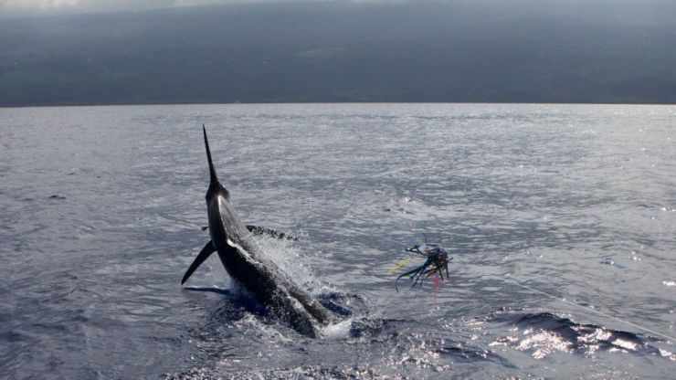 2012 Billfisheries of the Year – #8 Kona, Hawaii