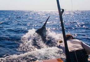 2012 Billfisheries of the Year – #4 Cairns, Australia