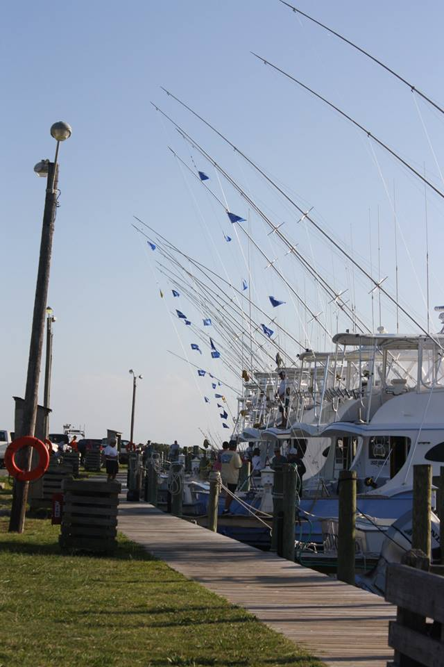 White Marlin Party Off Oregon Inlet Billfish Report