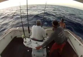 Black Marlin Close Call