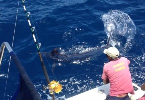 Kilifi's Blue Marlin Bite