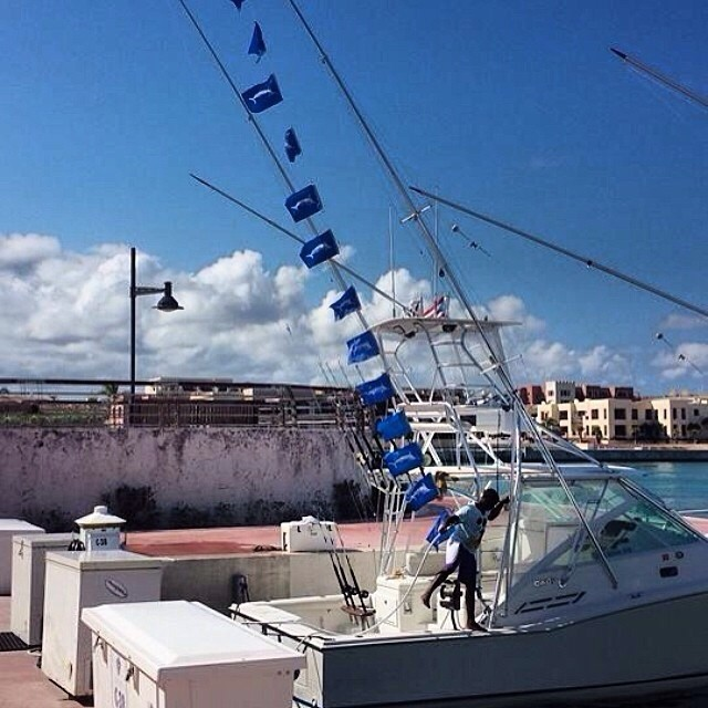 White Marlin Show in Cap Cana