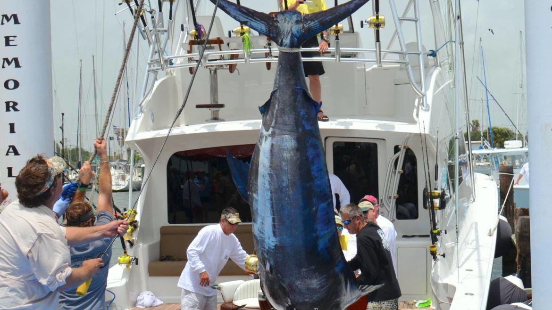 New Texas Blue Marlin Record