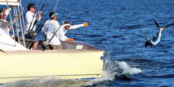 Sailfish behind Allure II