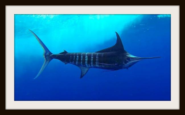Fish Tank II