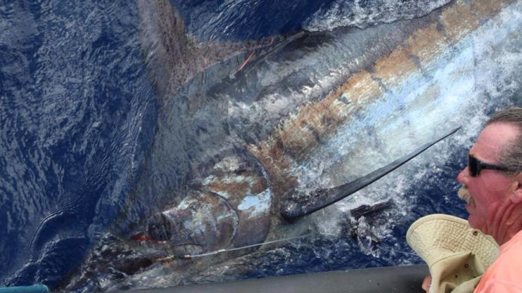 2014 Billfisheries of the Year – Honorable Mention Madeira
