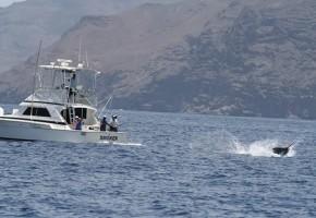 2014 Billfisheries of the Year – #2 Cape Verdes