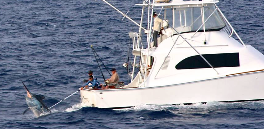 2014 Billfisheries of the Year – #3 Cairns