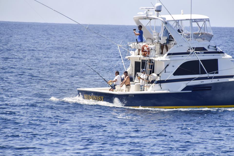 Blue Marlin Show in La Gomera