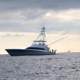 White Marlin Run Begins