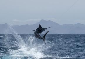 2015 Billfisheries of the Year – #2 Cape Verdes
