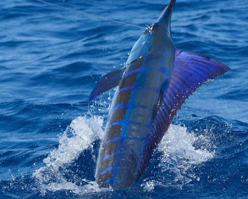 Kenyas Billfishin'