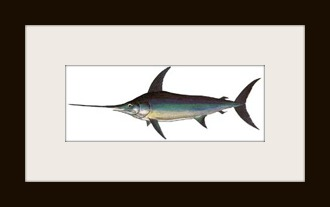 Broadbill-SwordfishS