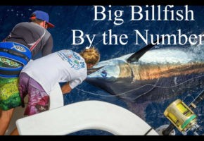 2016 Big Billfish By The Numbers