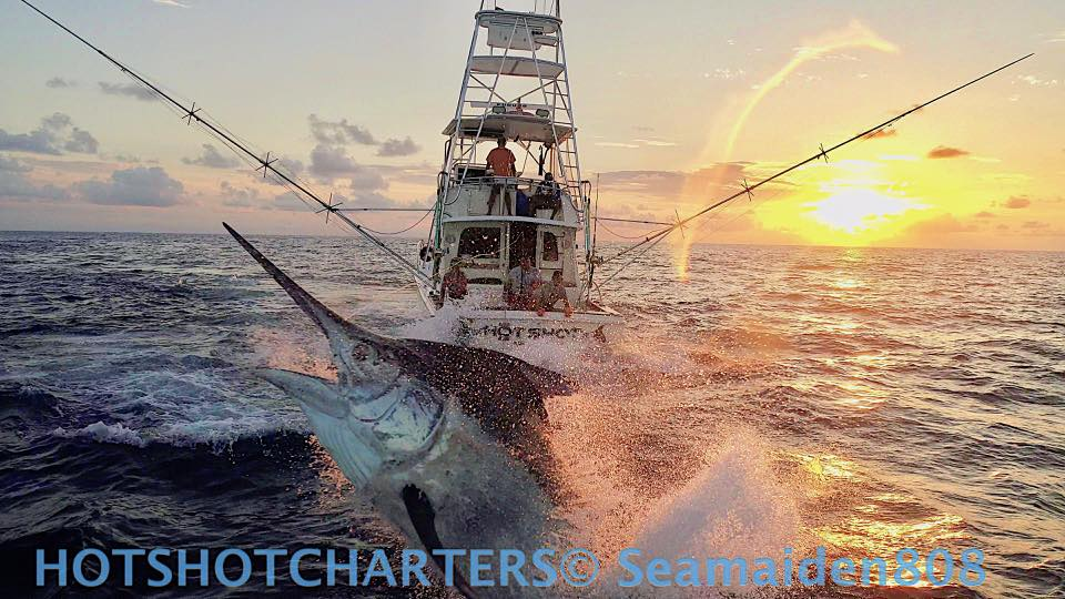 Black Marlin on Hot Shot