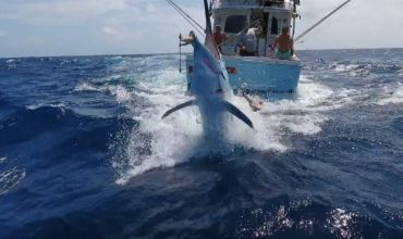 Black Marlin on the Drone