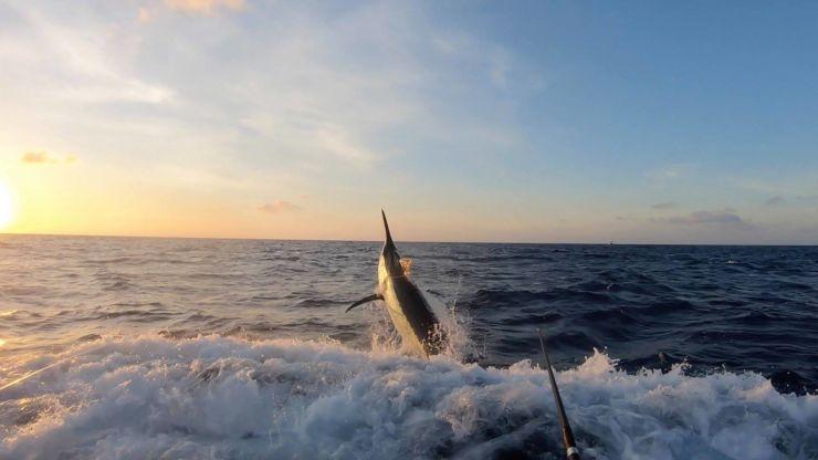 2018 Billfisheries of the Year – #1 GBR