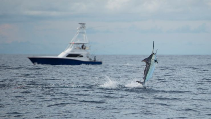 2019 Billfisheries of the Year – #3 Los Suenos