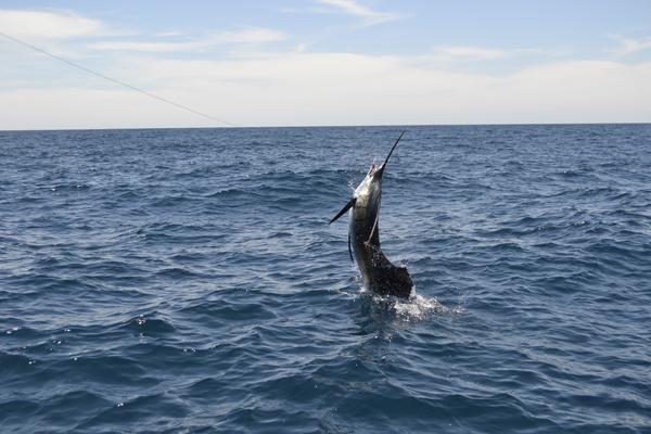 FishMonster trip report: Day 2, Sailfish Bay