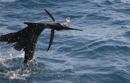 FishMonster trip report: Day 1, Sailfish Bay