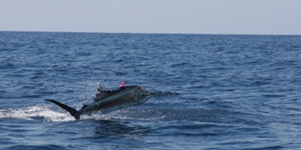 Daily Reports from Sailfish Bay – Coming Up