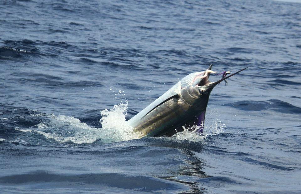 Kenya's Sailfish Bite