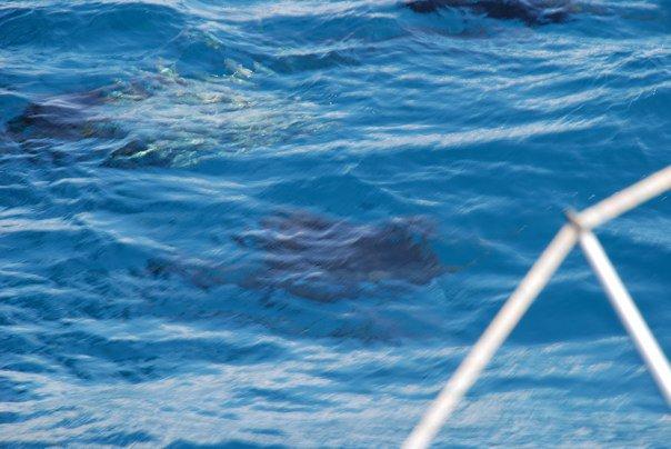 Red Hot Sailfishing – Isla Mujeres