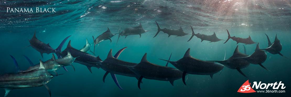 The Shot – Black Marlin
