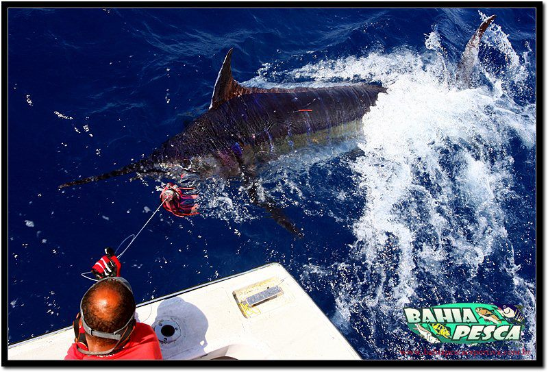2012 Billfisheries of the Year – #9 Canavieiras, Brazil