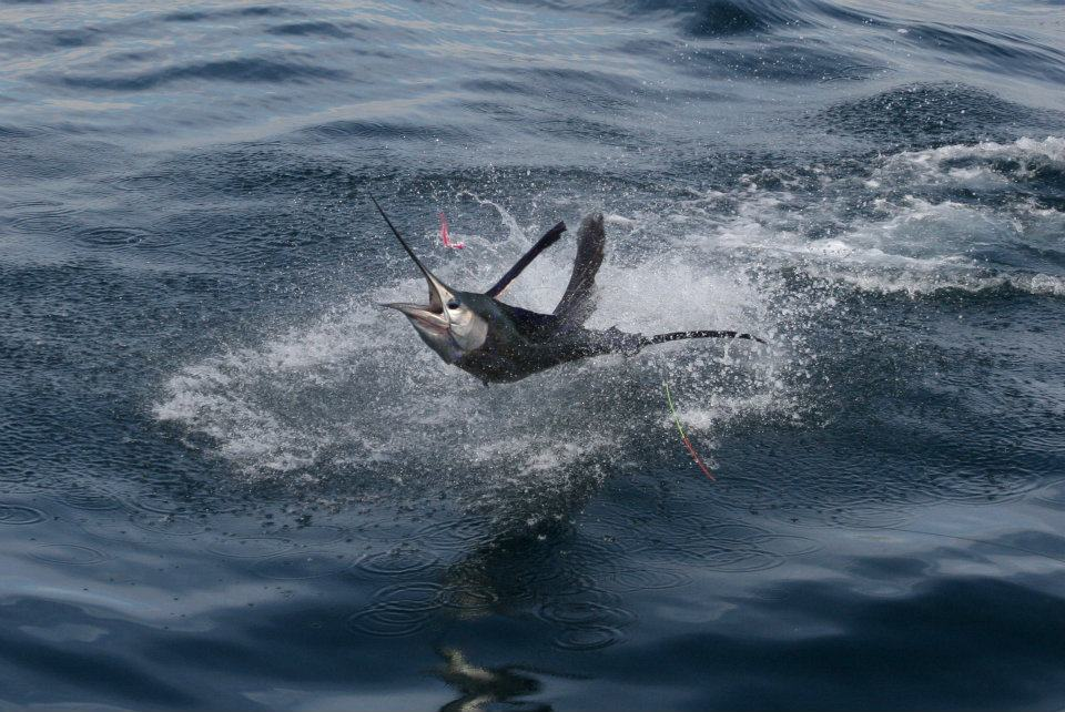 2012 Billfisheries of the Year – #6 Guatemala