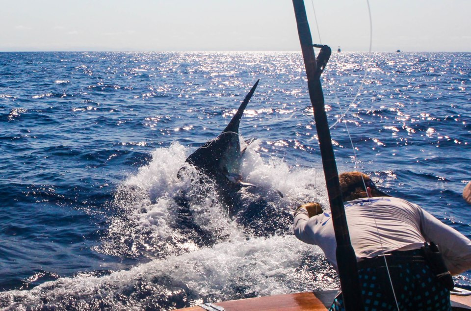 2012 Billfisheries of the Year – #4 Cairns, Australia