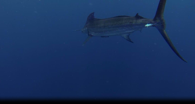 2013 Billfisheries of The Year – #6 Los Suenos, Costa Rica