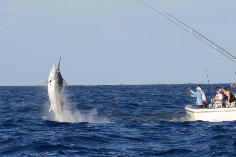 2013 Billfisheries of the Year – #3 Cairns, Australia