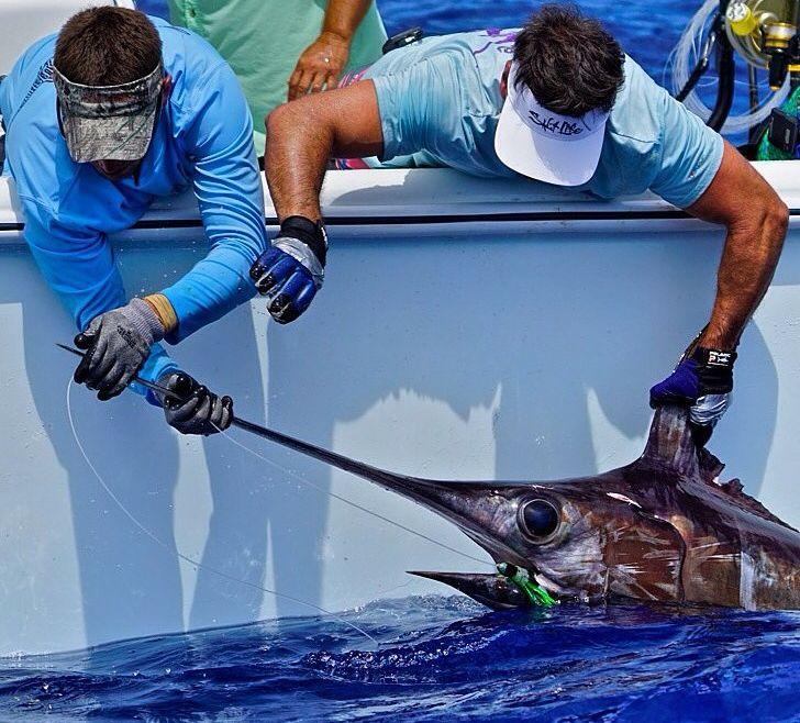 2015 Billfisheries of the Year – #8 South Florida & Keys